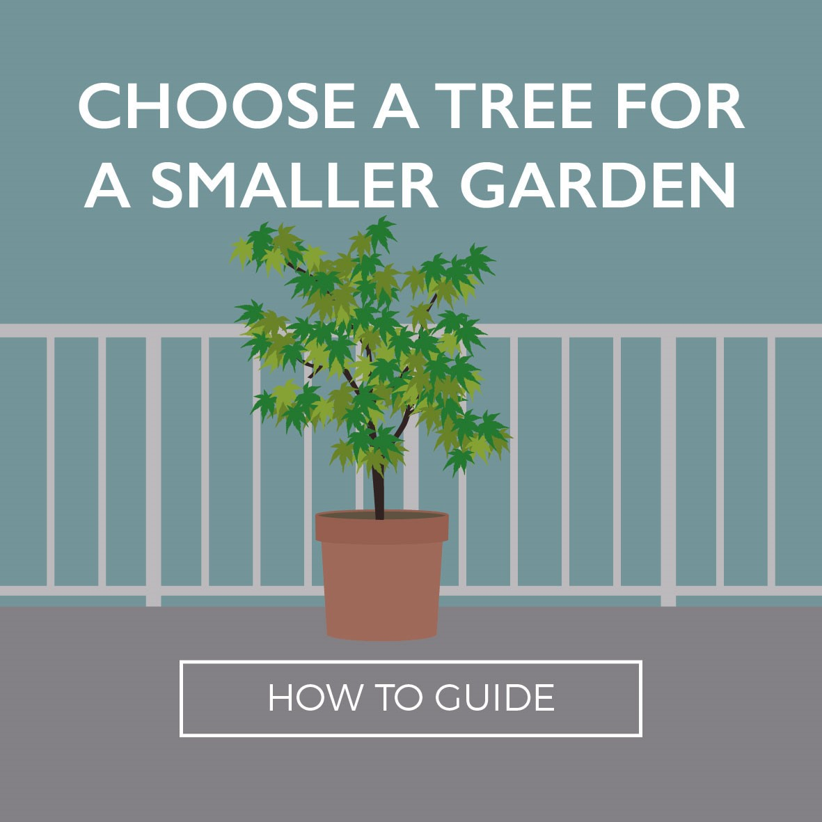 Tree for small garden